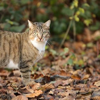 Foto de foco seletivo de um gato adorável na floresta