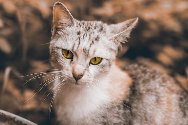 Foto de foco seletivo de um gato branco com bokeh