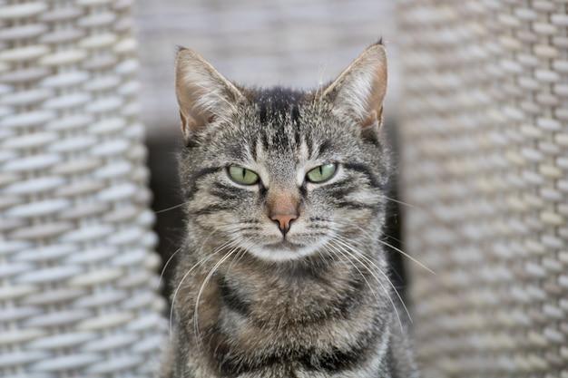 Foto de foco seletivo de um gato cinza com uma cara de gato bravo
