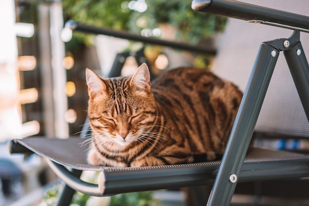 Foto de foco seletivo de um gato fofo deitado em uma cadeira com os olhos fechados