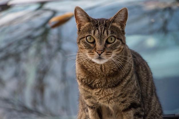 Foto de foco seletivo de um gato marrom posando para a câmera