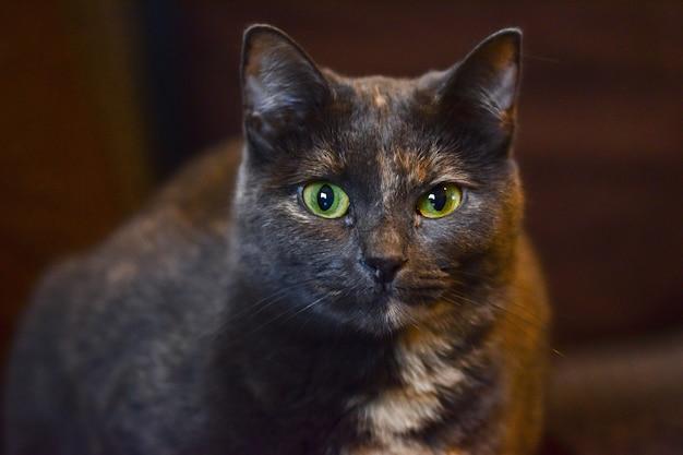 Foto de foco seletivo de um gato preto fofo com olhos verdes zangados
