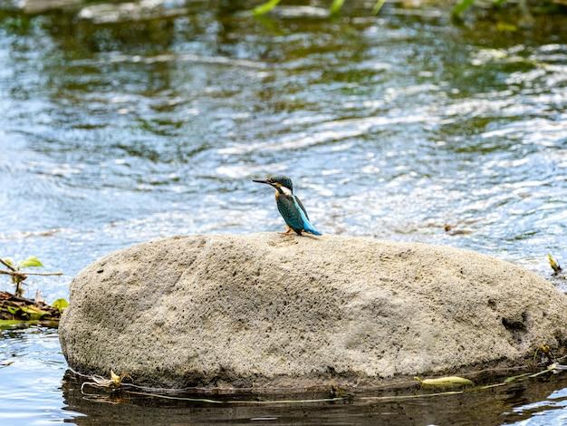 Foto de foco seletivo de um guarda-rios comum empoleirado na pedra