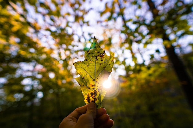 Foto de foco seletivo de um homem segurando uma folha de outono contra o sol