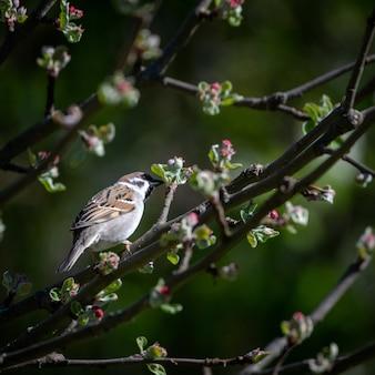 Foto de foco seletivo de um kingbird em um galho de árvore
