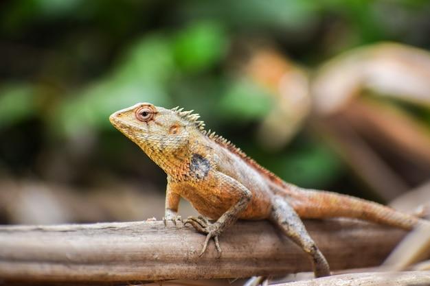 Foto de foco seletivo de um lagarto ao ar livre durante o dia