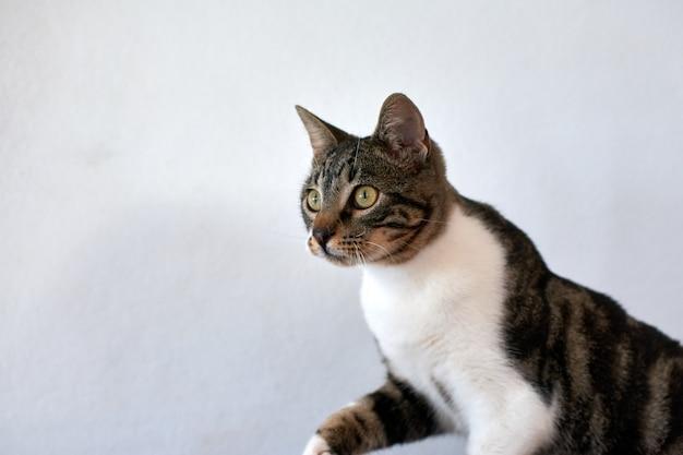 Foto de foco seletivo de um lindo gato de olhos verdes