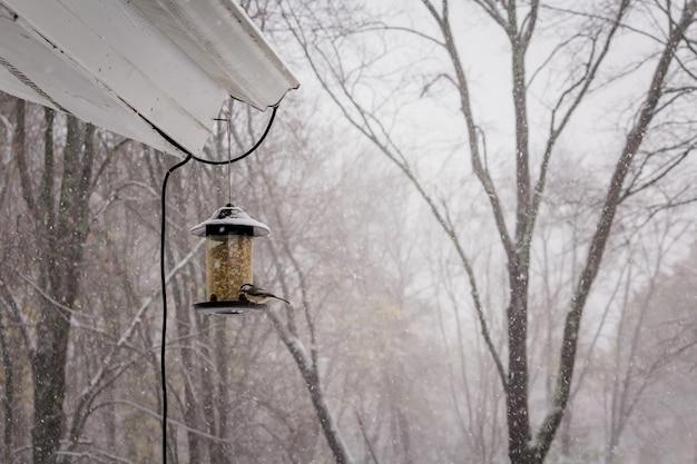 Foto de foco seletivo de um lindo pássaro cardeal em um dia de inverno