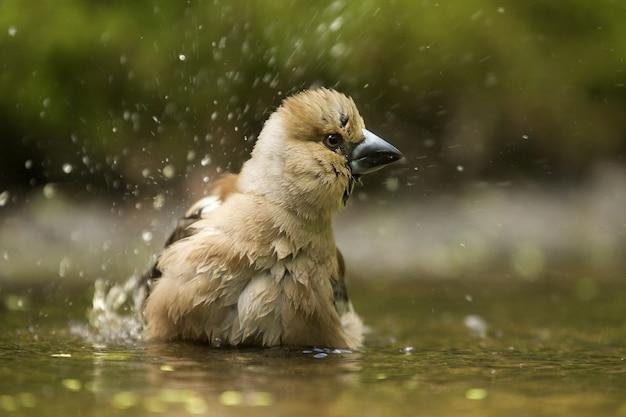 Foto de foco seletivo de um lindo pássaro falcão