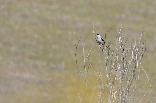 Foto de foco seletivo de um lindo pássaro sentado nos galhos finos de uma árvore