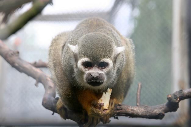 Foto de foco seletivo de um macaco no galho de uma árvore