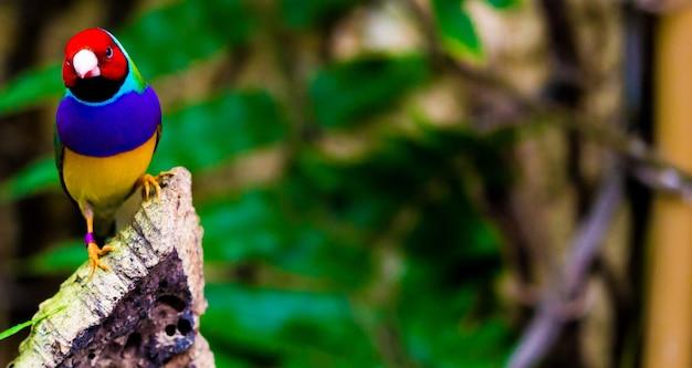 Foto de foco seletivo de um papagaio colorido na natureza