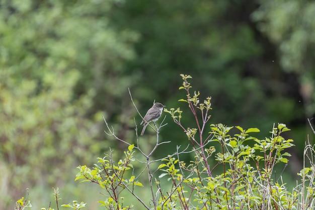 Foto de foco seletivo de um pardal empoleirado em um galho