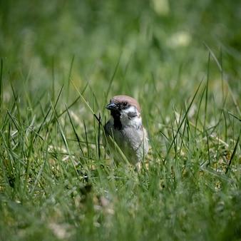 Foto de foco seletivo de um passarinho em um gramado verde
