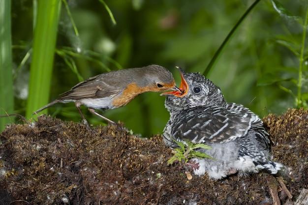 Foto de foco seletivo de um pássaro alimentando seu filhote em um tronco entre as árvores