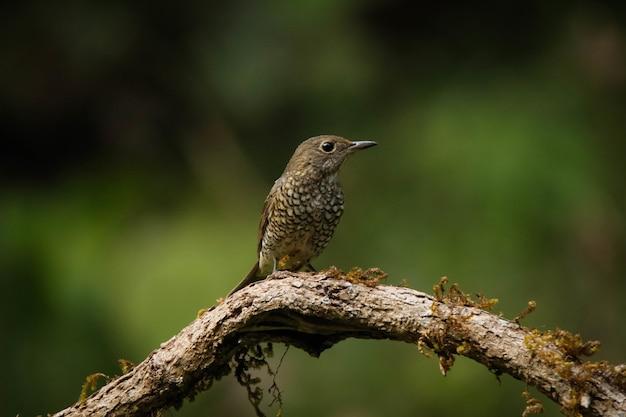 Foto de foco seletivo de um pássaro empoleirado em um galho de madeira