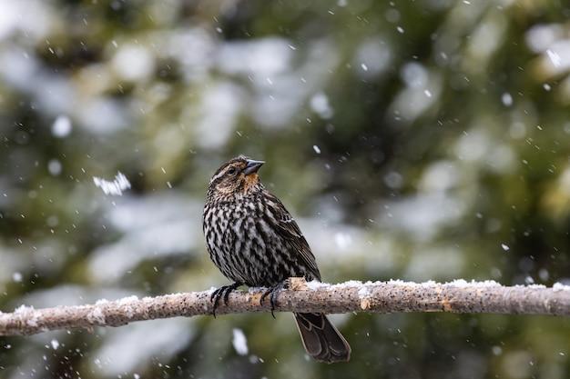 Foto de foco seletivo de um pássaro exótico no galho fino de uma árvore sob a neve