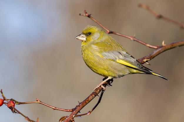 Foto de foco seletivo de um pássaro exótico preto e amarelo sentado em um galho de árvore