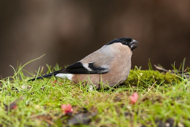 Foto de foco seletivo de um pássaro exótico preto e marrom sentado em um campo coberto de grama