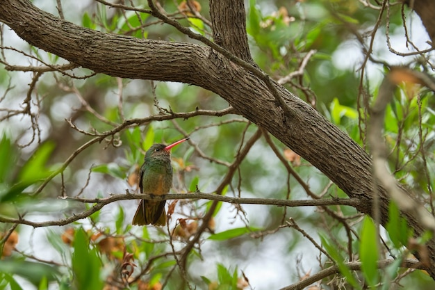 Foto de foco seletivo de um pássaro exótico sentado em um galho de árvore