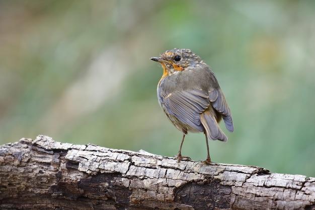 Foto de foco seletivo de um pássaro exótico sentado no galho grosso de uma árvore