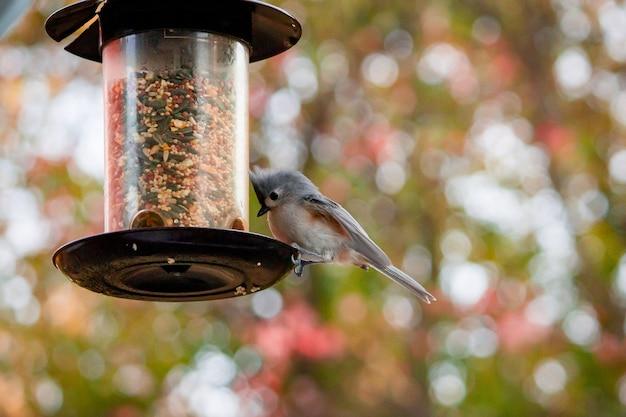 Foto de foco seletivo de um pássaro no alto de árvores