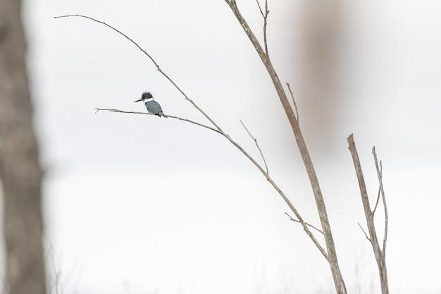 Foto de foco seletivo de um pássaro parado no galho