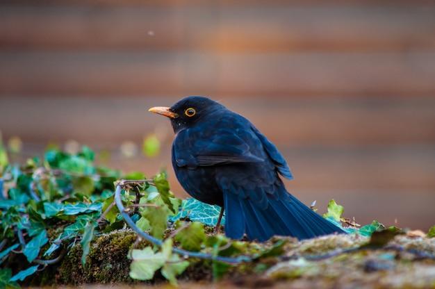 Foto de foco seletivo de um pássaro preto