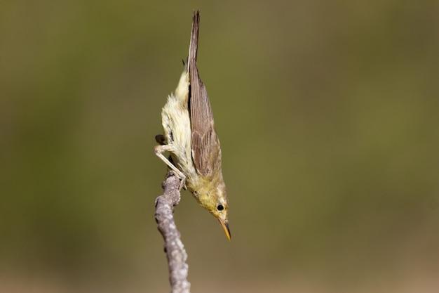 Foto de foco seletivo de um pássaro sentado no galho de uma árvore durante o dia