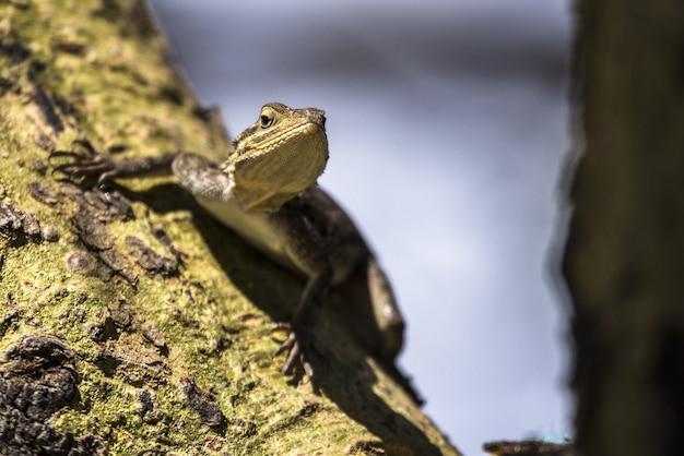 Foto de foco seletivo de um pequeno lagarto