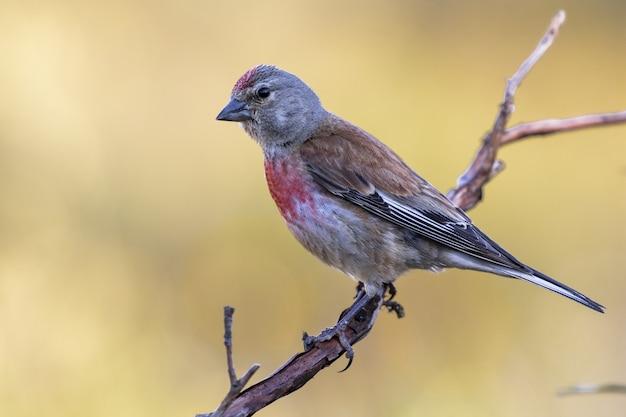 Foto de foco seletivo de um pequeno pardal exótico sentado no galho fino de uma árvore
