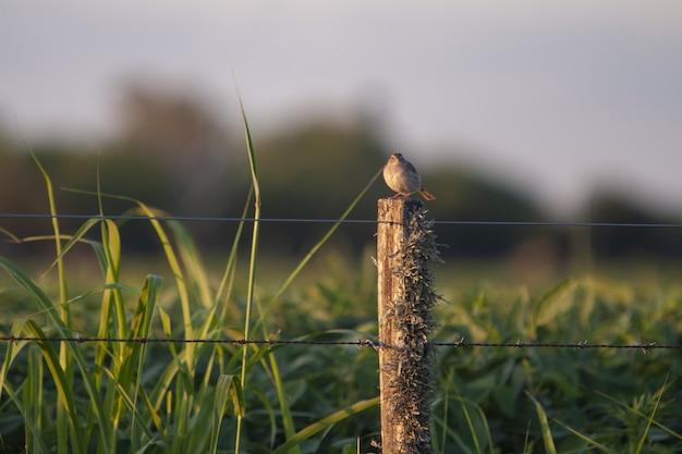 Foto de foco seletivo de um pequeno pássaro empoleirado em uma cerca de madeira