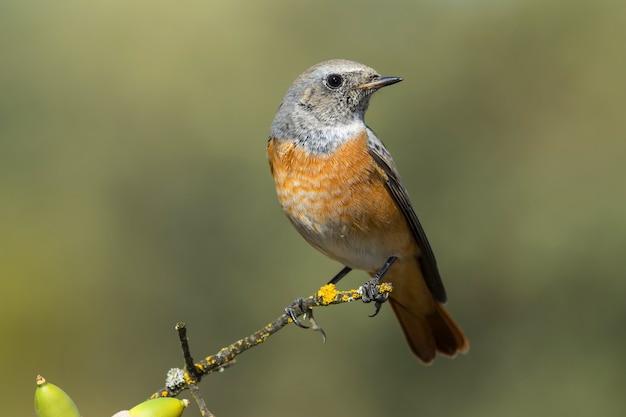 Foto de foco seletivo de um pequeno pássaro exótico no galho fino de uma árvore