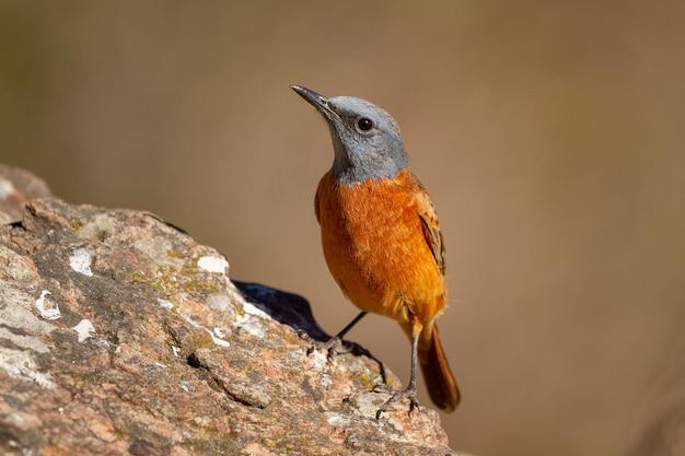 Foto de foco seletivo de um pequeno pássaro exótico no tronco de uma árvore em um dia ensolarado