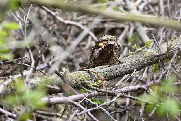 Foto de foco seletivo de um pequeno pássaro sentado no galho de uma árvore em uma floresta