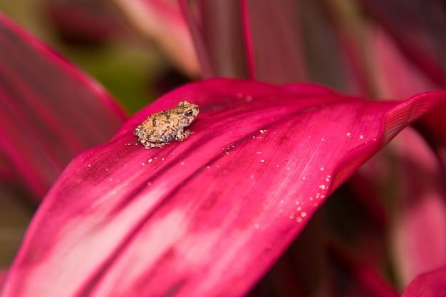 Foto de foco seletivo de um pequeno sapo descansando sobre uma planta de folha rosa com um fundo desfocado