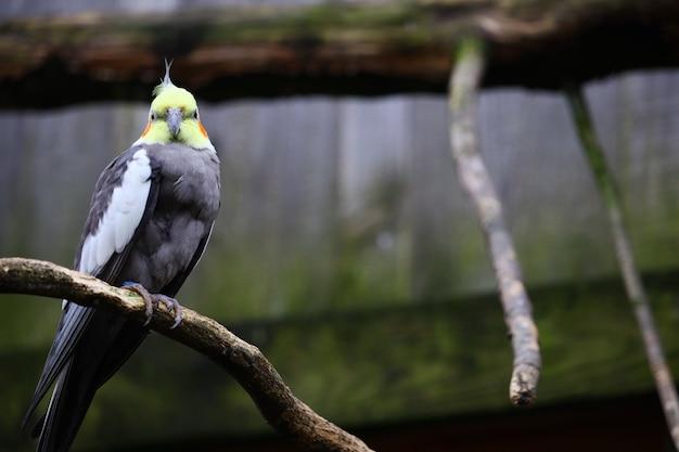Foto de foco seletivo de um periquito em um galho