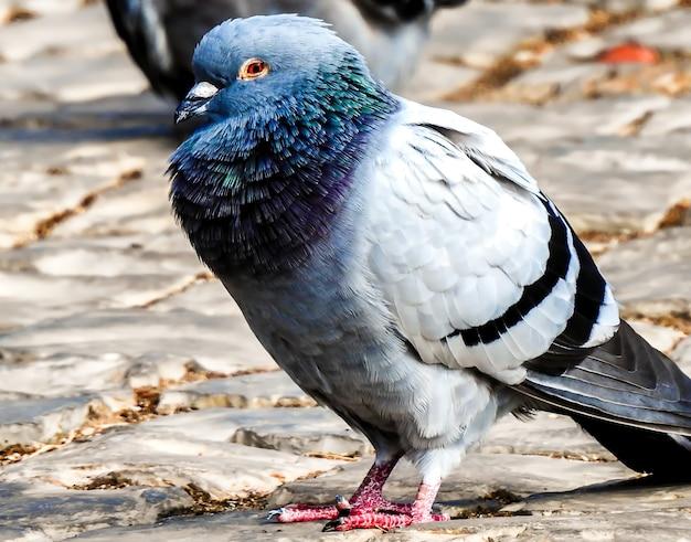 Foto de foco seletivo de um pombo ao ar livre