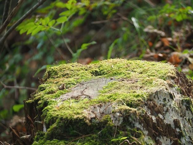 Foto de foco seletivo de um tronco de árvore coberto de musgo