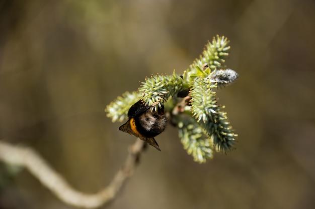 Foto de foco seletivo de uma abelha em um galho de árvore
