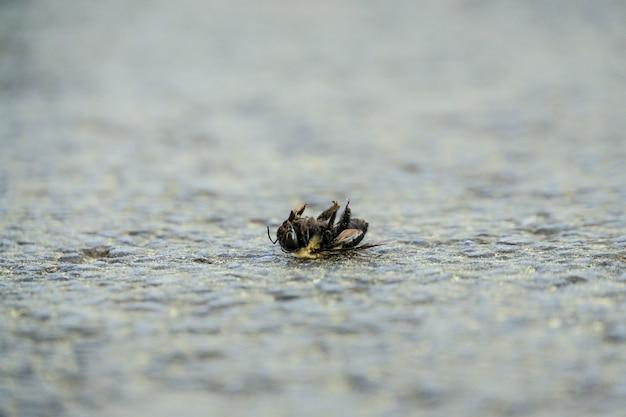 Foto de foco seletivo de uma abelha morta no chão de pedra