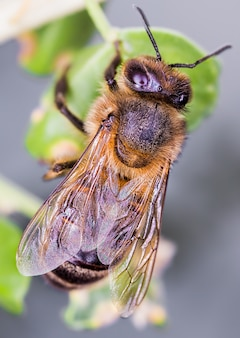 Foto de foco seletivo de uma abelha sentada em um galho