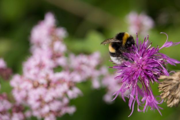 Foto de foco seletivo de uma abelha sentada em uma flor roxa exótica no meio de uma floresta