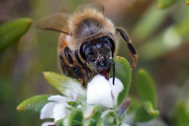 Foto de foco seletivo de uma abelha sentada em uma flor