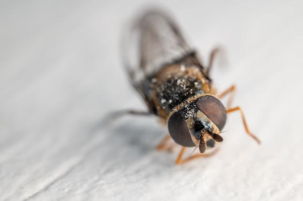 Foto de foco seletivo de uma abelha