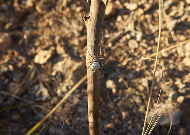 Foto de foco seletivo de uma aranha em um galho