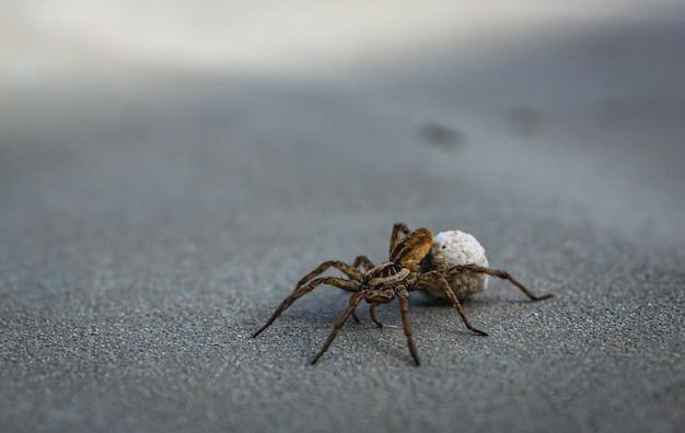 Foto de foco seletivo de uma aranha-lobo