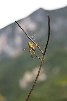 Foto de foco seletivo de uma aranha nephilidae em um galho Foto Premium