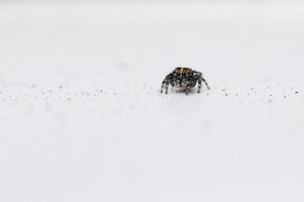 Foto de foco seletivo de uma aranha saltadora