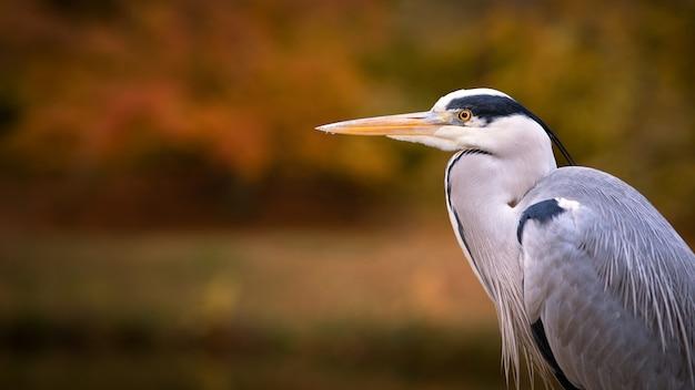 Foto de foco seletivo de uma bela garça-real azul